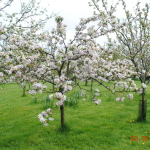 Weaverham News - Trafford Drive Allotments Community Orchard