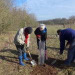 Memorial Orchard Planting Pictures