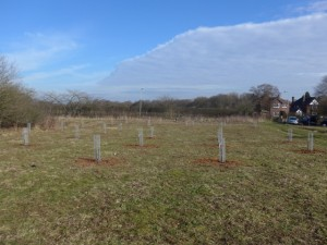 Orchard planting Feb 16 006