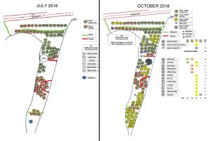 Planting plans 2016 and 2018
