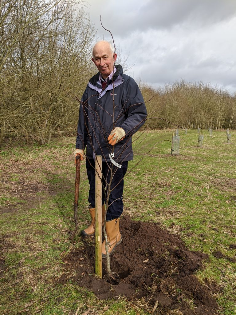 Charles Cottle planting a tree
